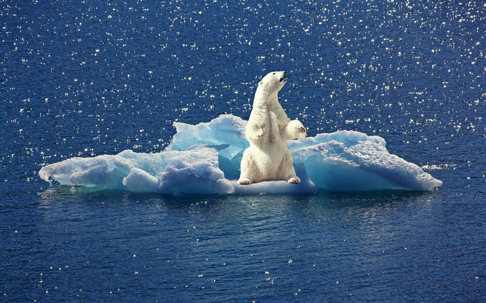 Global Marketing Strategies and climate change